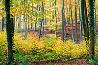 autumnal colors in the forest