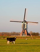 Traditional Dutch windmill with cow and stork in Groot_Ammers, the Netherlands