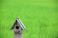 birdhouse with paddy field background.