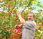 Senior farmer, harvesting a apple