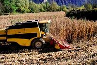 corn cob harvester
