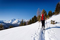 Cross-country skier during the ascent to Cima Bocche Mountain, with Colbricon Mountain and the Lagorai Group at the rear, Passo Rolle to the side, Dol...