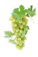 White grapes with leaves. Isolated on white background