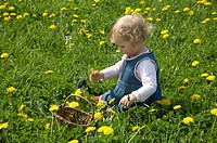 Little girl with a basket picking dandelions on a flower meadow