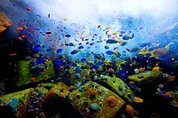 Oxygen is pumped into an aquarium with fish and corals