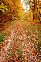 Colorful autumnal landscape with deciduous forest and many fallen leaves
