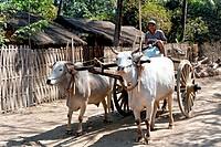 Oxcart, village near Toungoo, Myanmar, Burma, Southeast Asia, Asia