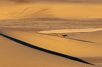 Oryx on Sand dunes.Oryx on Sand dunes, Skeleton Coast National Park, Namibia.
