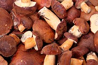 Heap of fresh ceps. Nature background