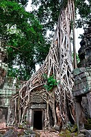 Angkor Ta Prohm, overgrown with aerial roots of a Strangler Fig (Ficus virens), Cambodia, Southeast Asia, Asia