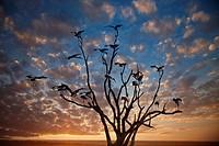 Digital sky with tree full of yellow_billed stocks.
