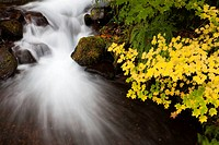 Long exposure of a waterfall and autumn colored leaves in the Columbia Gorge area of Oregon