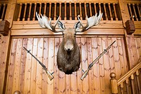 Scandinavian wooden cabin wall with moose head and two guns
