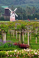 Wind Mill in Vineyard