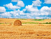 landscape view of a farm field with gathered crops _ stacks of wheat