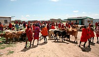 Weekly livestock market in the Maasai Mara game reserve  The village is inhabited by Massai who consider their animals as most important in live  Each...