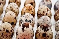 eggs of partridge close up