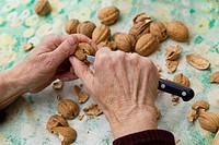 Person shelling walnuts with knife