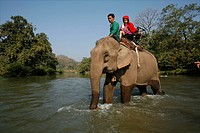 Members of the Longneck group cross a river by elephant Approximately 300 Burmese refugees in Thailand are members of the indigenous group known as th...