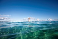 Woman Stand Up Paddle Boarder Paddling On Ocean