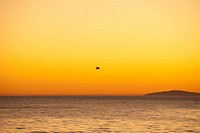 Bird Flying Over The Ocean At Sunset