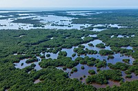 Aerial view, Everglades National Park, Florida, USA.