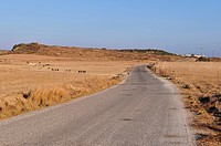 Road in the countryside, Kos Island, Greece