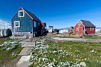 Inuit houses and cotton grass, Inuit settlement of Tiniteqilaaq, Sermilik Fjord, East Greenland, Greenland