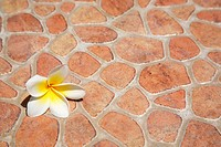 gentle flower lays on a stone surface