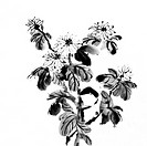 Flowers of painting in Chinese traditional style on white background.