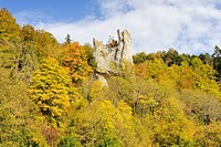 Autumnal beech forest in the Danube Valley with the remains of Burg Neugutenstein castle, also called Gebrochen Gutenstein, near Inzigkofen, Sigmaring...
