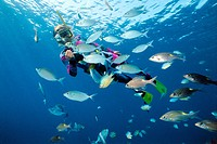 Snorkeler in tropical coral reef with rabbitfish Siganus and other coral fishes, Maldives, Indian ocean, Asia