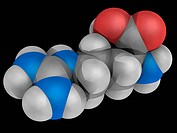 Arginine, molecular model. Nonessential alpha_amino acid found in a variety of foods. Atoms are represented as spheres and are colour_coded: carbon gr...