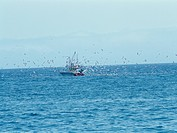 Seabirds and fishing boats herd