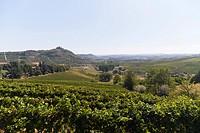 Vineyards near Asti, southern Monferrato, Piedmont, Italy, Europe