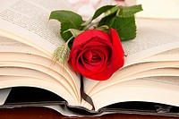 Diada de Sant Jordi, The Rose and the Book, Catalonia