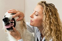 Veterinarian examining dog in office