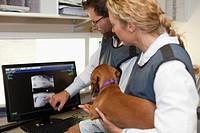 Veterinarians examining x_rays in office