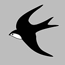 swallow silhouette on gray background