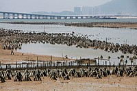 Fish farming in Xiamen Bay, Fujian Province, China, Asia