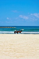 Horse patrol on a beach