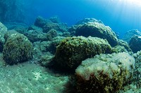 Rocks covered with algae in the underwater landscape at Sa Dragonera Nature Reserve, San Telmo, Sant Elm, Majorca, Mallorca, Balearic Islands, Spain, ...