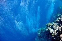 Raising underwater bubbles in the blue sea