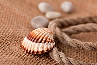 shell laing on jute