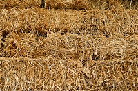 On the field, hay piled food for horses in winter