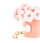 Pot of pink fresh roses, beautiful flowers isolated on white background