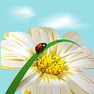 Ladybird on herb on background of the flower and sky