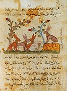 The council of hares, Arabic miniature from The Fables of Bidpai, 14th Century.  Paris, Bibliothèque Nationale De France (Library)
