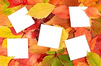 autumn leaves and white sheets of paper