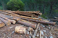 group of pine logs felled in a forest, Anso valley, Pyrenees, Huesca, Aragon, Spain